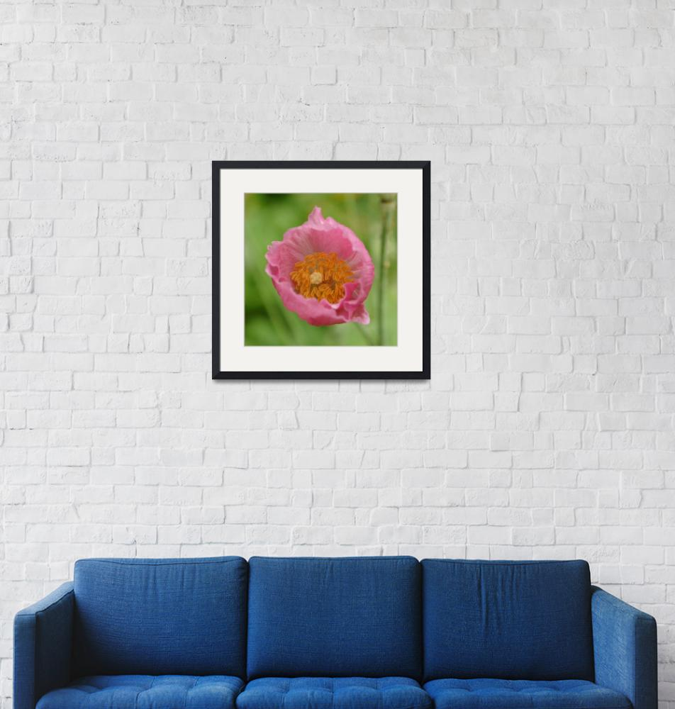 """Flowering Nepal Poppy""  (2014) by AdrianWale"