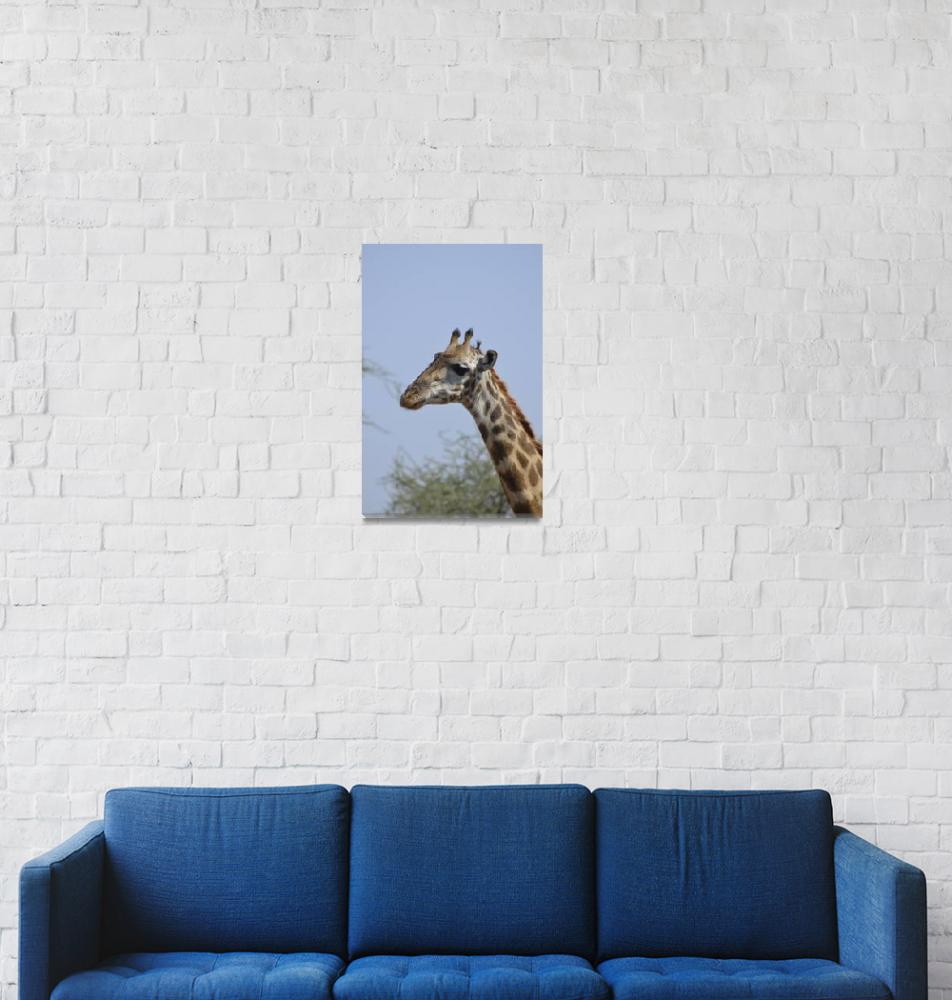 """Giraffe in Tanzania""  by Teager"