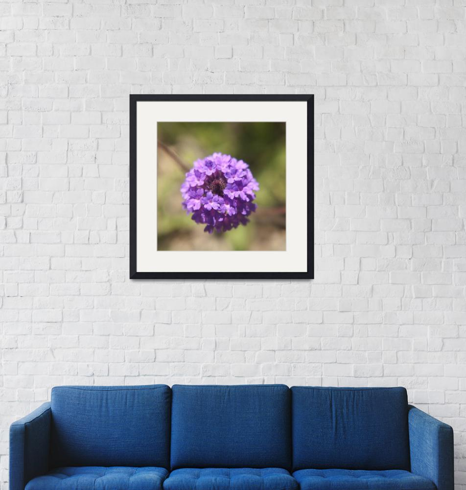 """Verbena rigida flower photography""  (2014) by SammyPhoto"