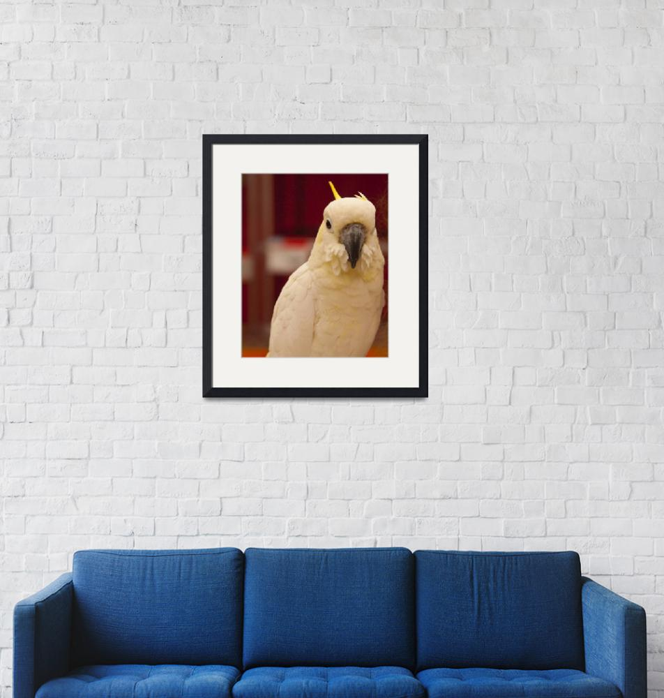 """""""White Cockatoo""""  (2011) by janesprints"""