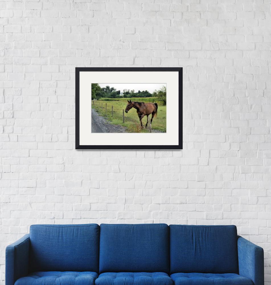 """""""Here Horsey Horsey""""  by LJS"""