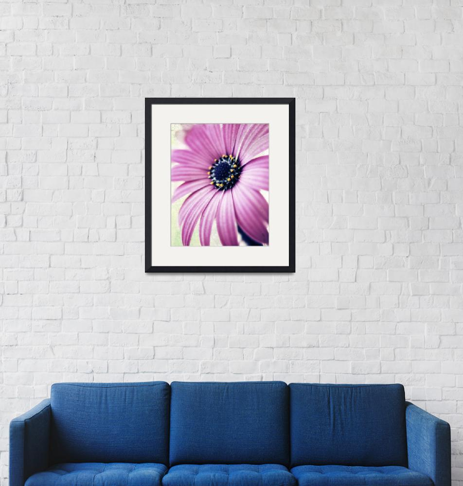 """""""purple daisy distressed copy"""" by divineinthedaily"""