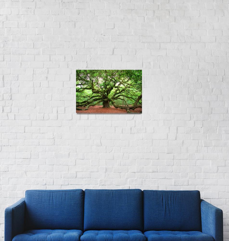 """""""Angel Oak""""  (2010) by kenrainwaterphotography"""