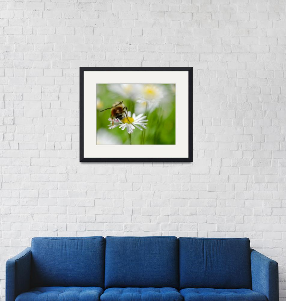 """""""Bee One with the Daisy""""  (2013) by boppintheblues"""
