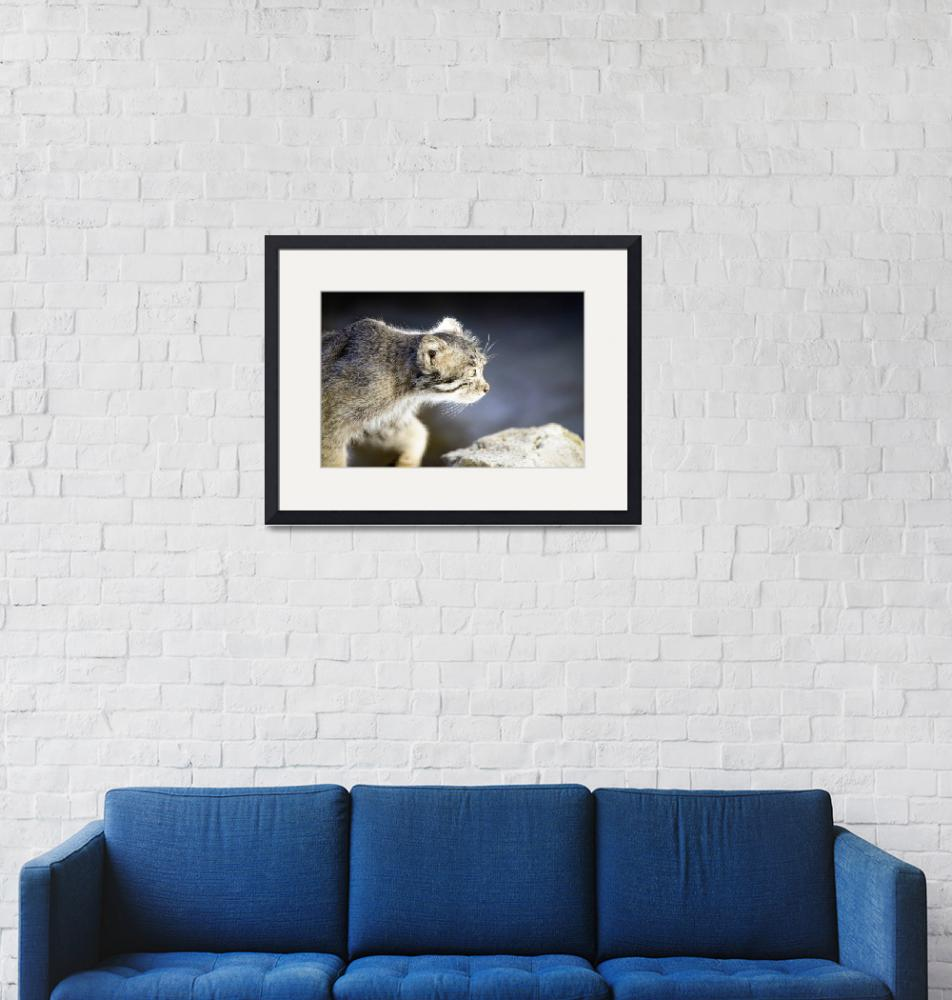 """Pallas Cat Portrait""  (2009) by artistslight"