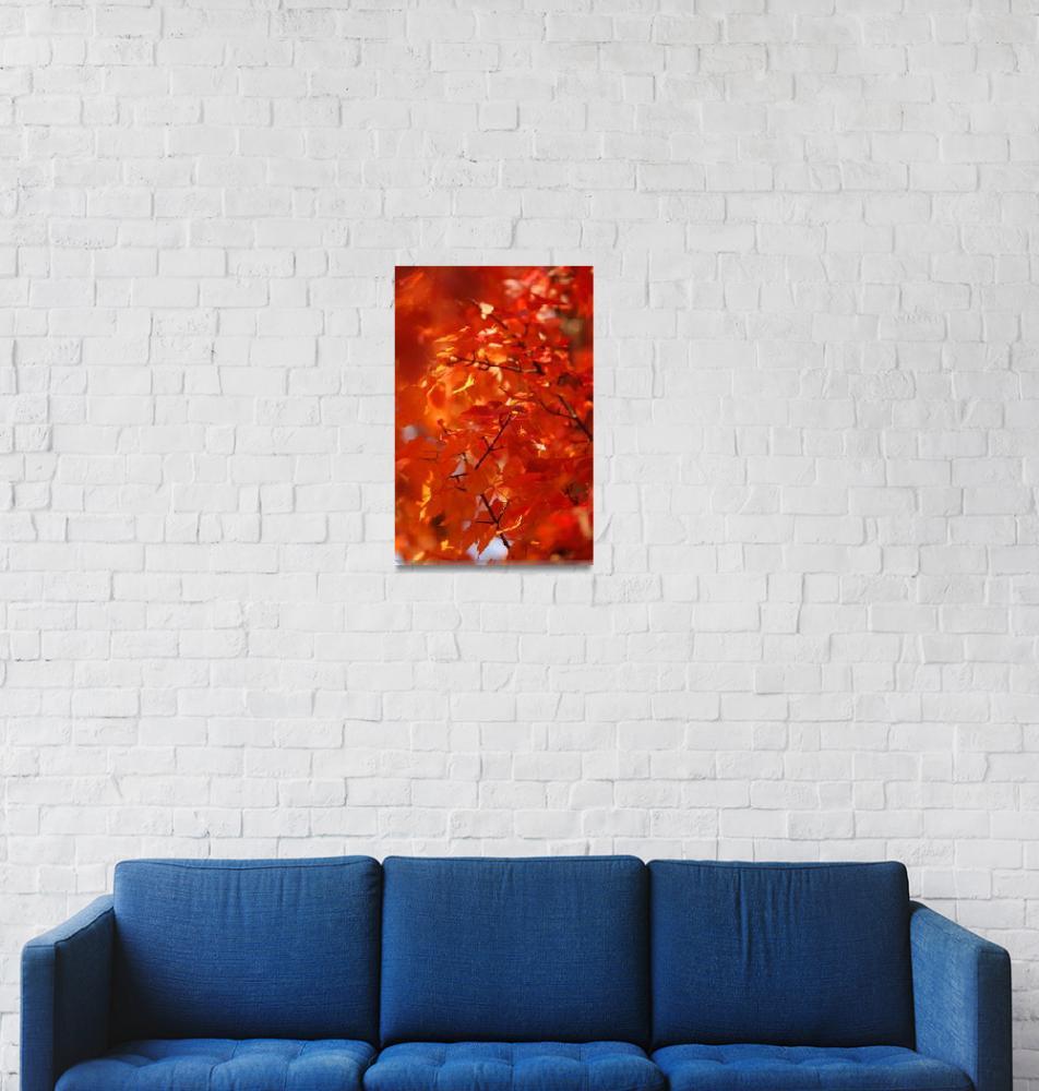 """Autumn Orange Sunshine""  (2009) by christopherboswell"