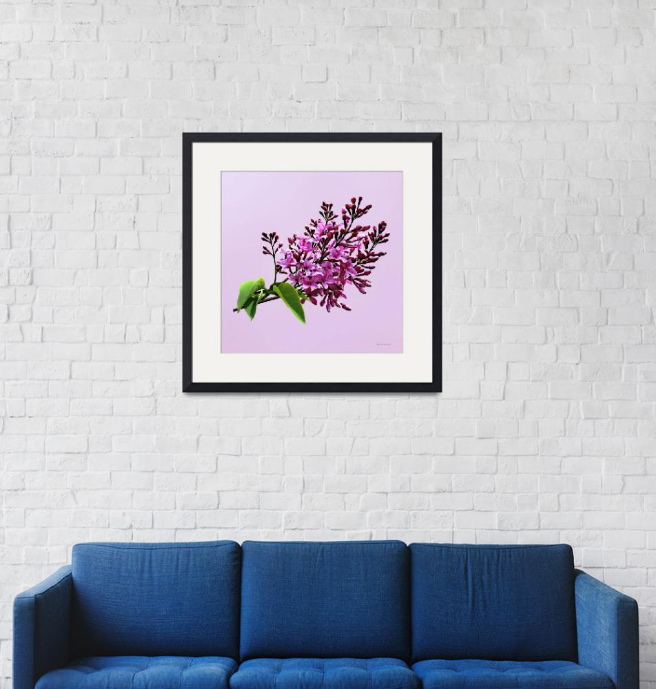 """""""Lilacs Starting to Open""""  by susansartgallery"""