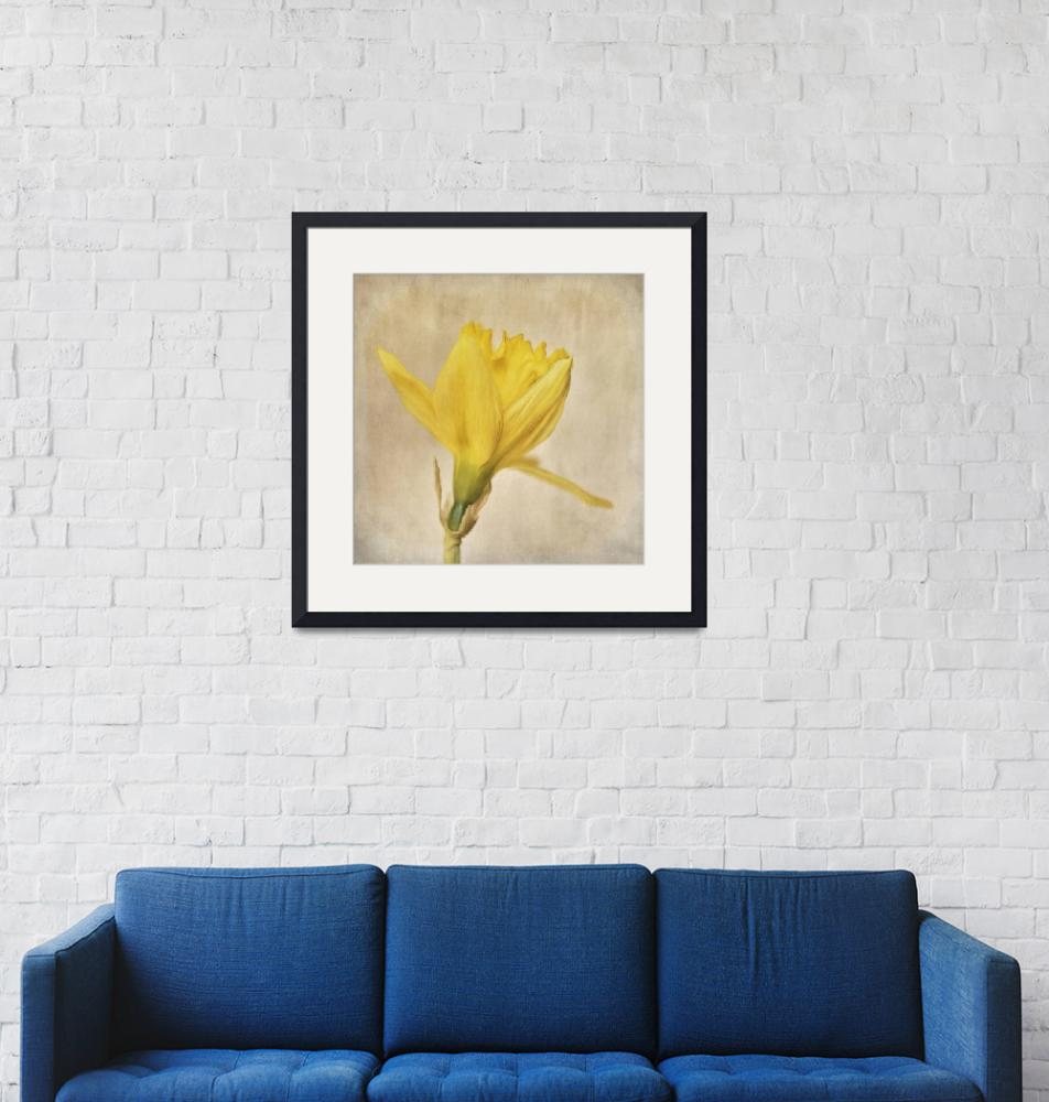 """A simple daffodil""  (2015) by Piri"
