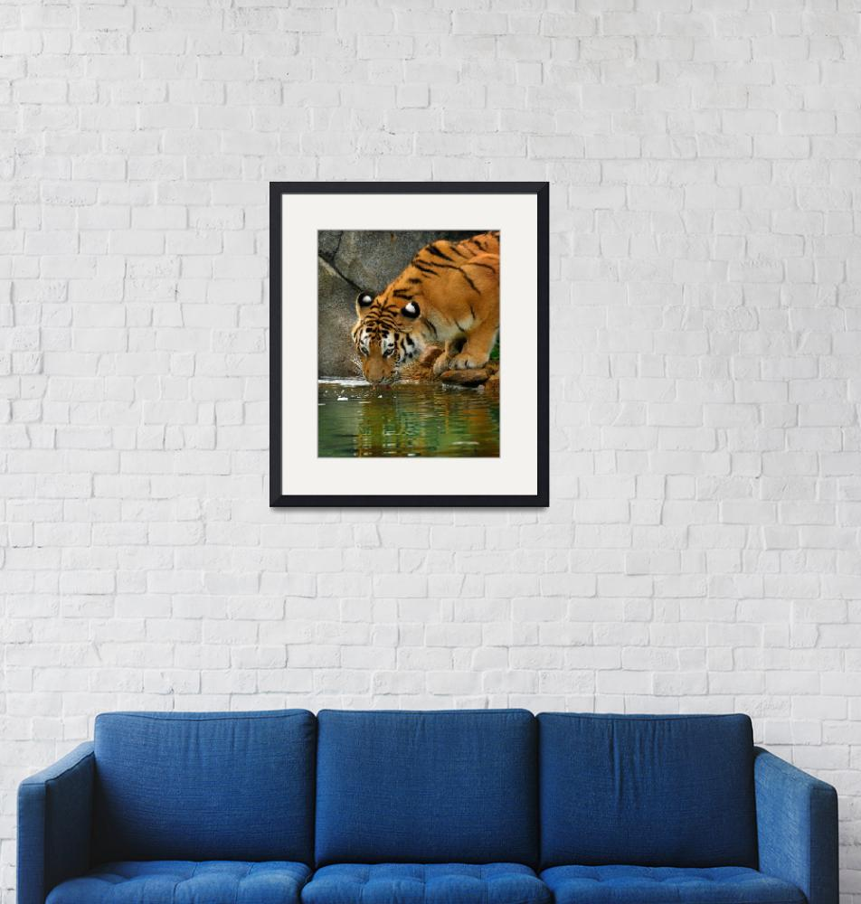 """""""A thiristy Tiger""""  (2009) by Dick_Wood"""