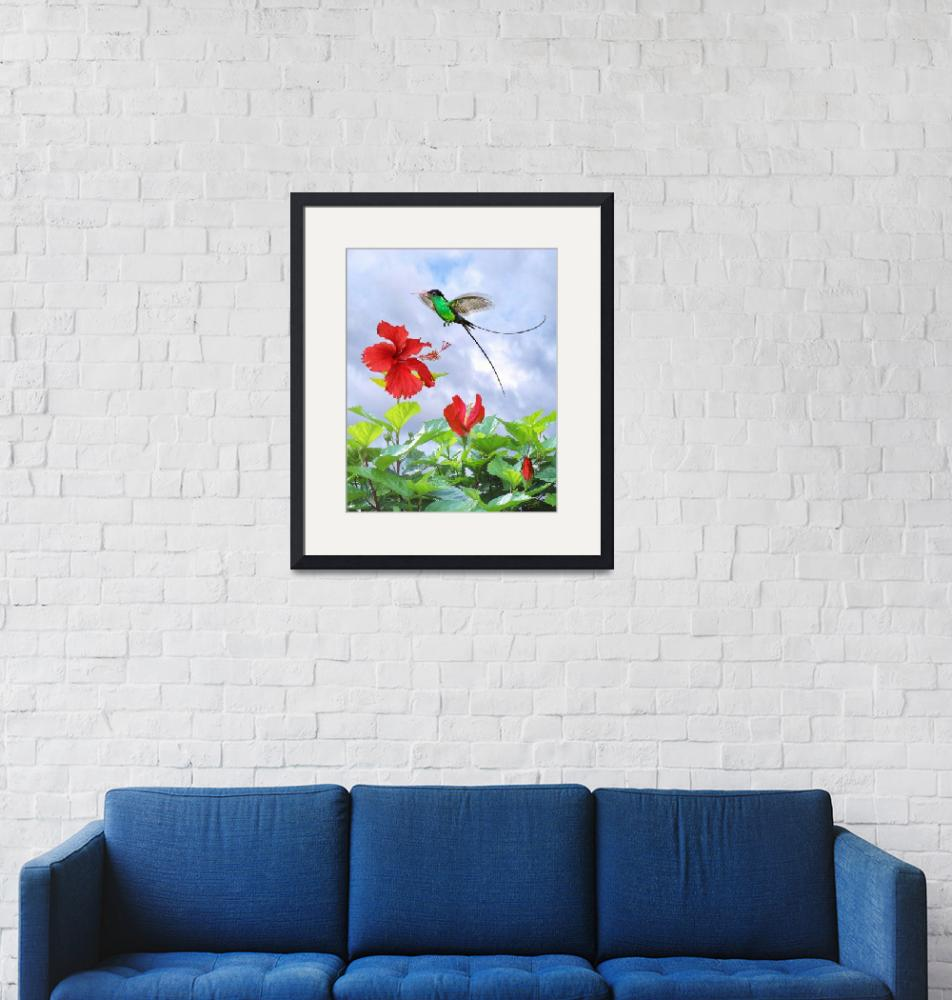 """""""Red-Billed Streamertail Hummingbird and Hibiscus""""  (2015) by spadecaller"""