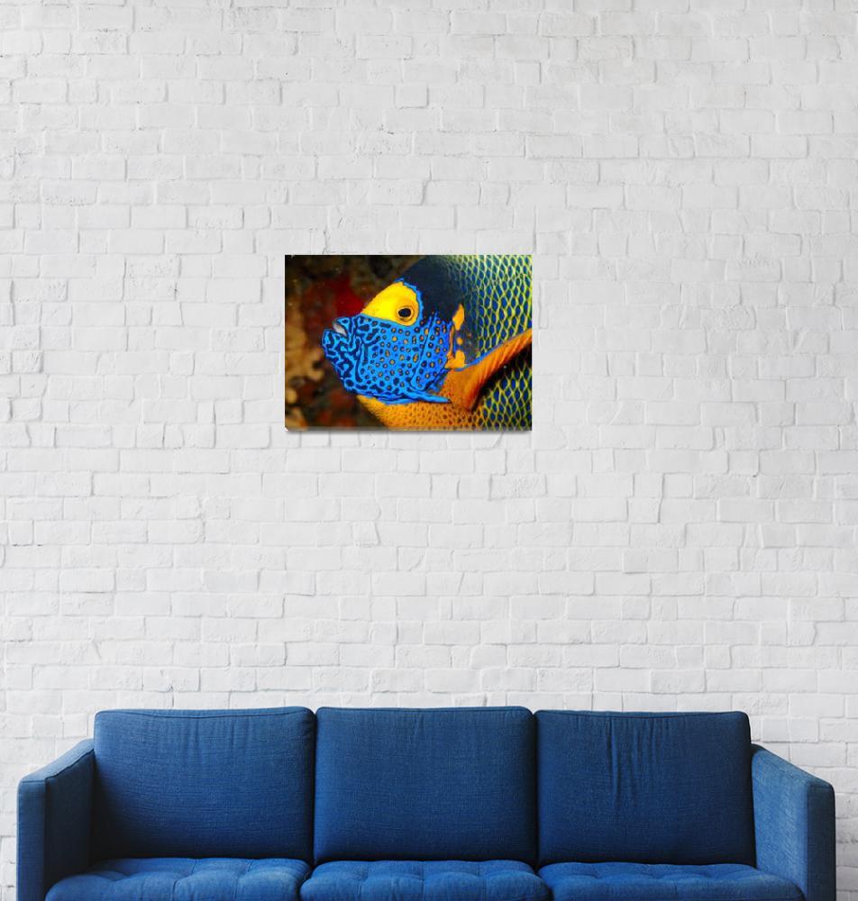 """Maldives Angelfish""  (2007) by JoaoPonces"