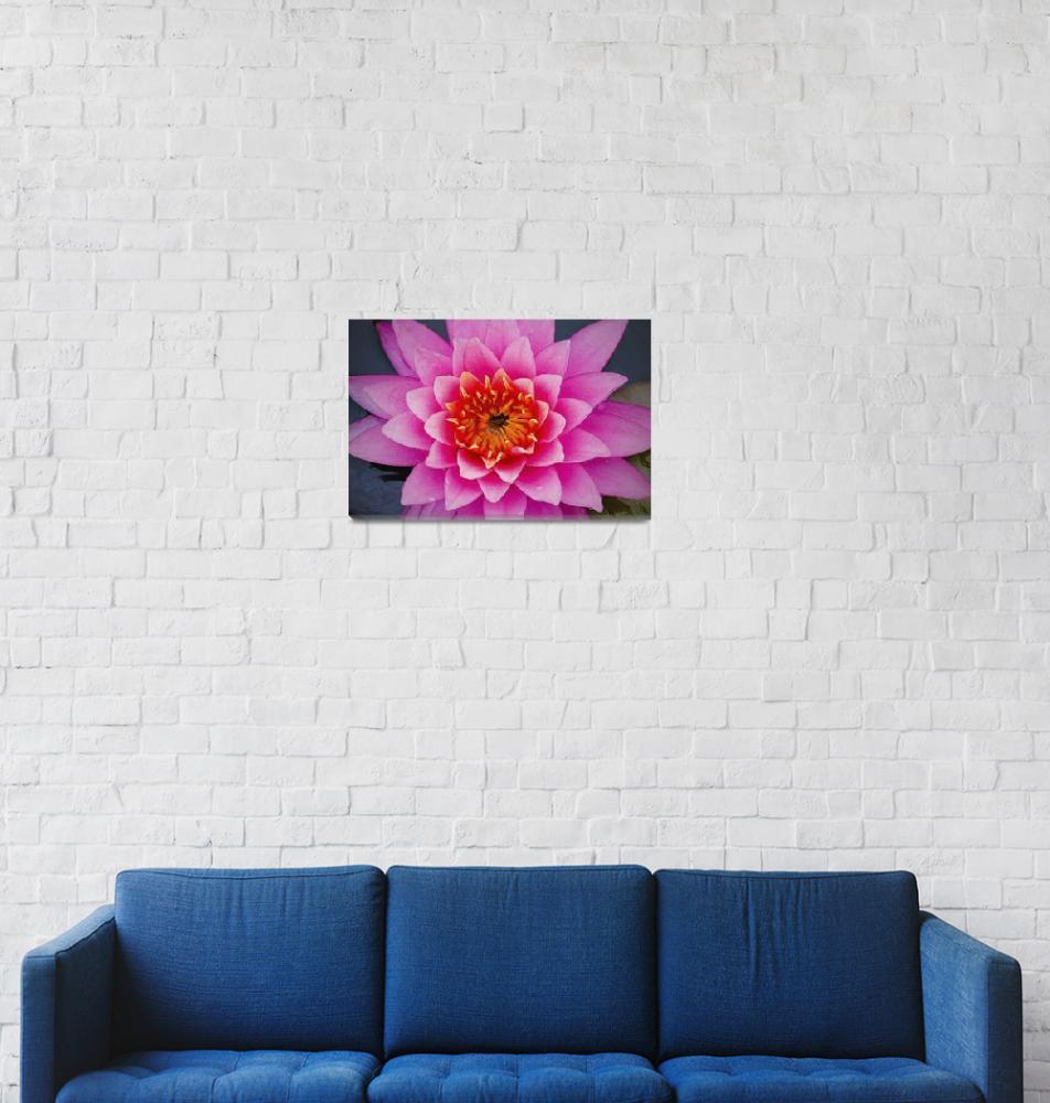 """Pop Art Water Lily""  (2015) by SoulfulPhotos"