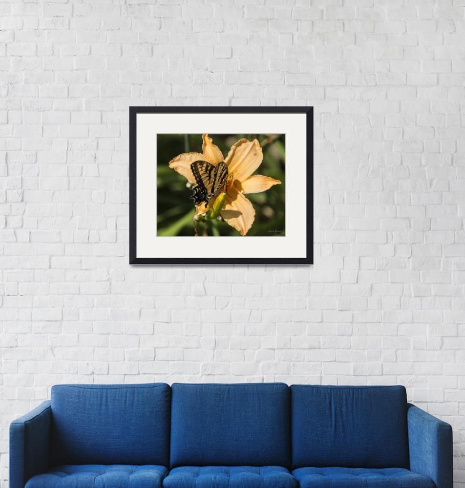 """""""Swallowtail on Day Lily""""  (2019) by LouiseReeves"""