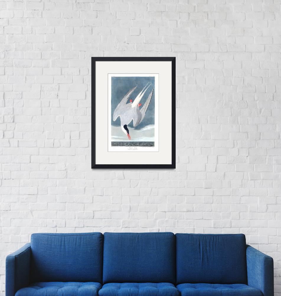 """""""Arctic Tern, Plate 250""""  by FineArtClassics"""