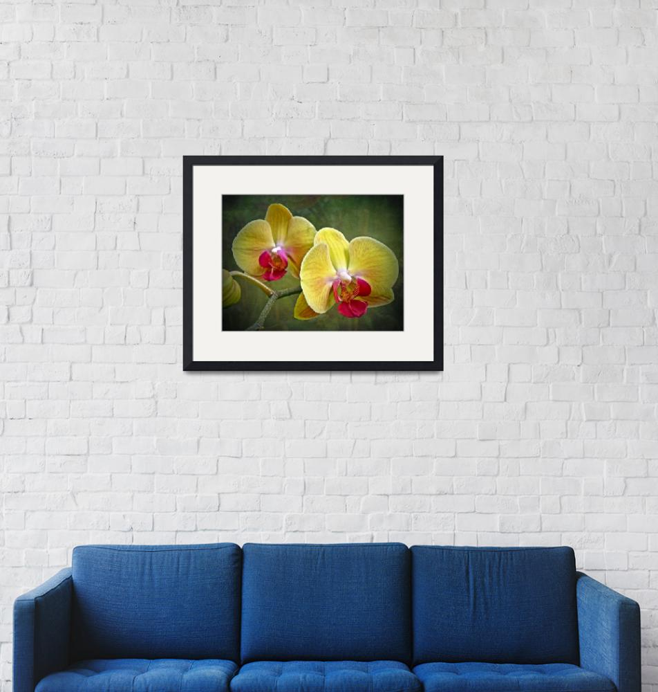 """Yellow Moth Orchid - Phalaenopsis""  (2013) by MotherNature1"
