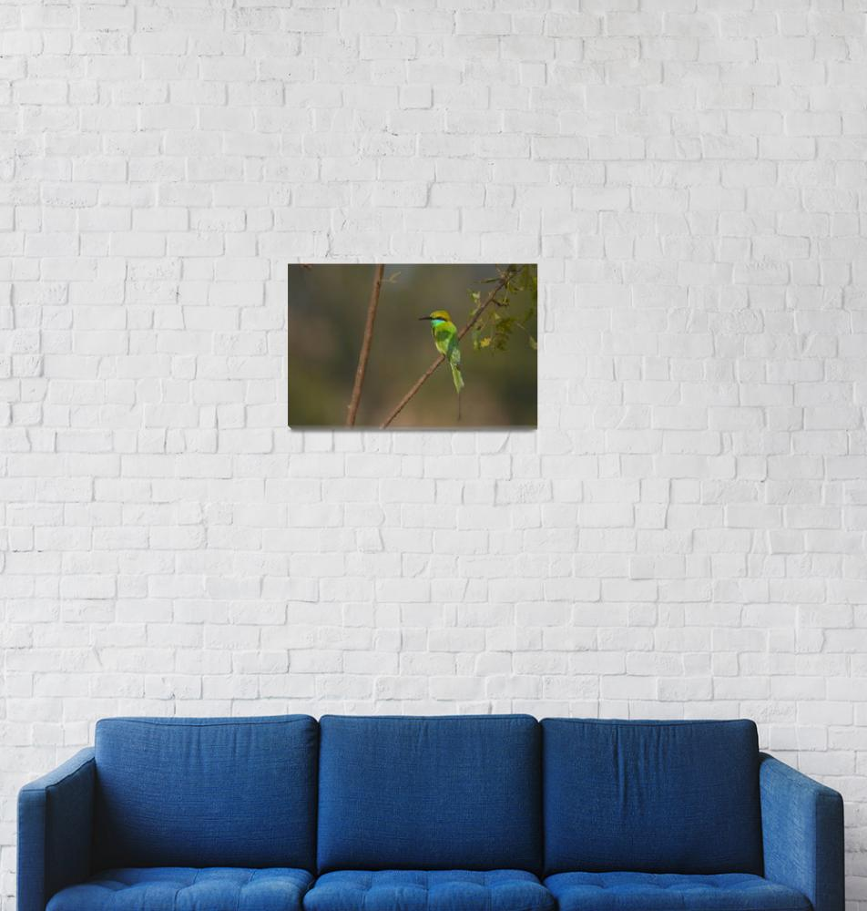 """Green Bee-eater""  by shreeram"