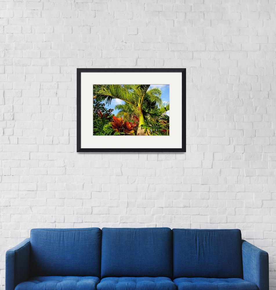 """""""Tropical plants""""  (2009) by zlazk"""
