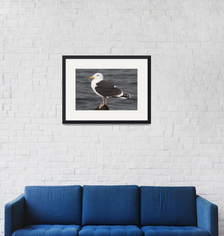 """""""Great Black-Backed Gull Photograph""""  by ArtLoversOnline"""