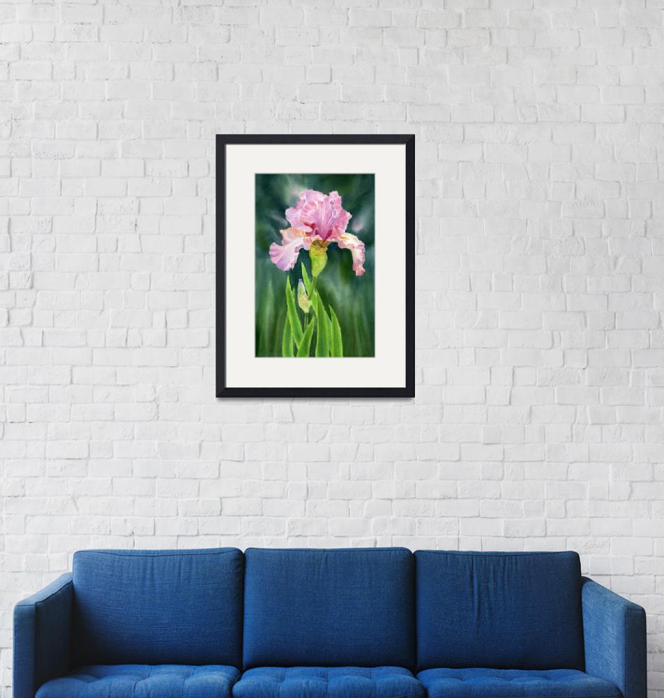 """""""Pink Iris dark background revised""""  by Pacific-NW-Watercolors"""