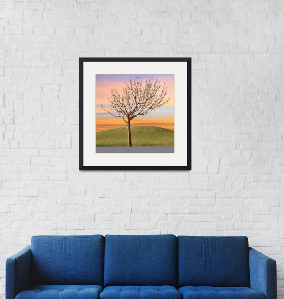 """Bare Tree in Sunset Solitude""  (2013) by charker"