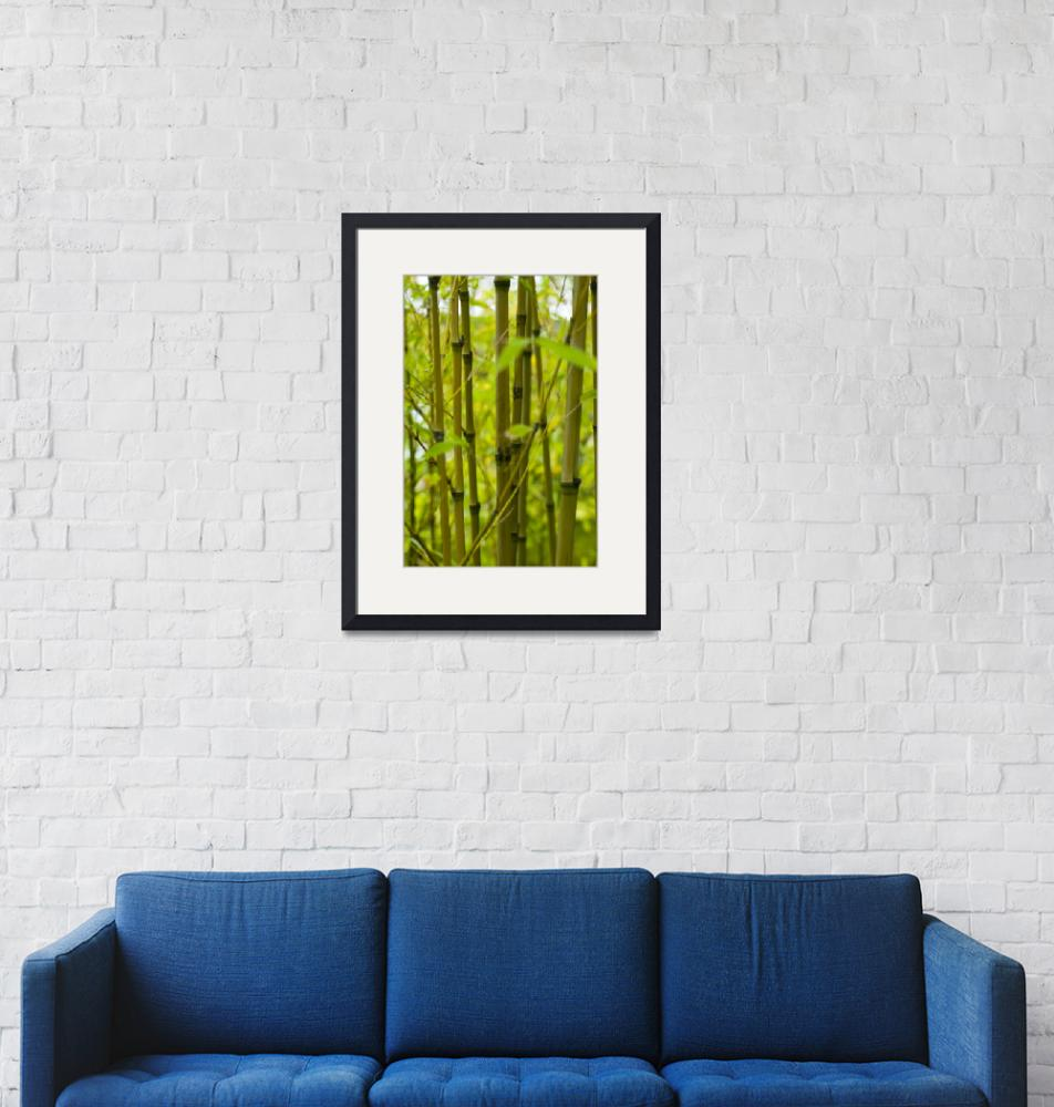 """""""ginko leaves cool green_1""""  (2009) by PatricGalvin"""