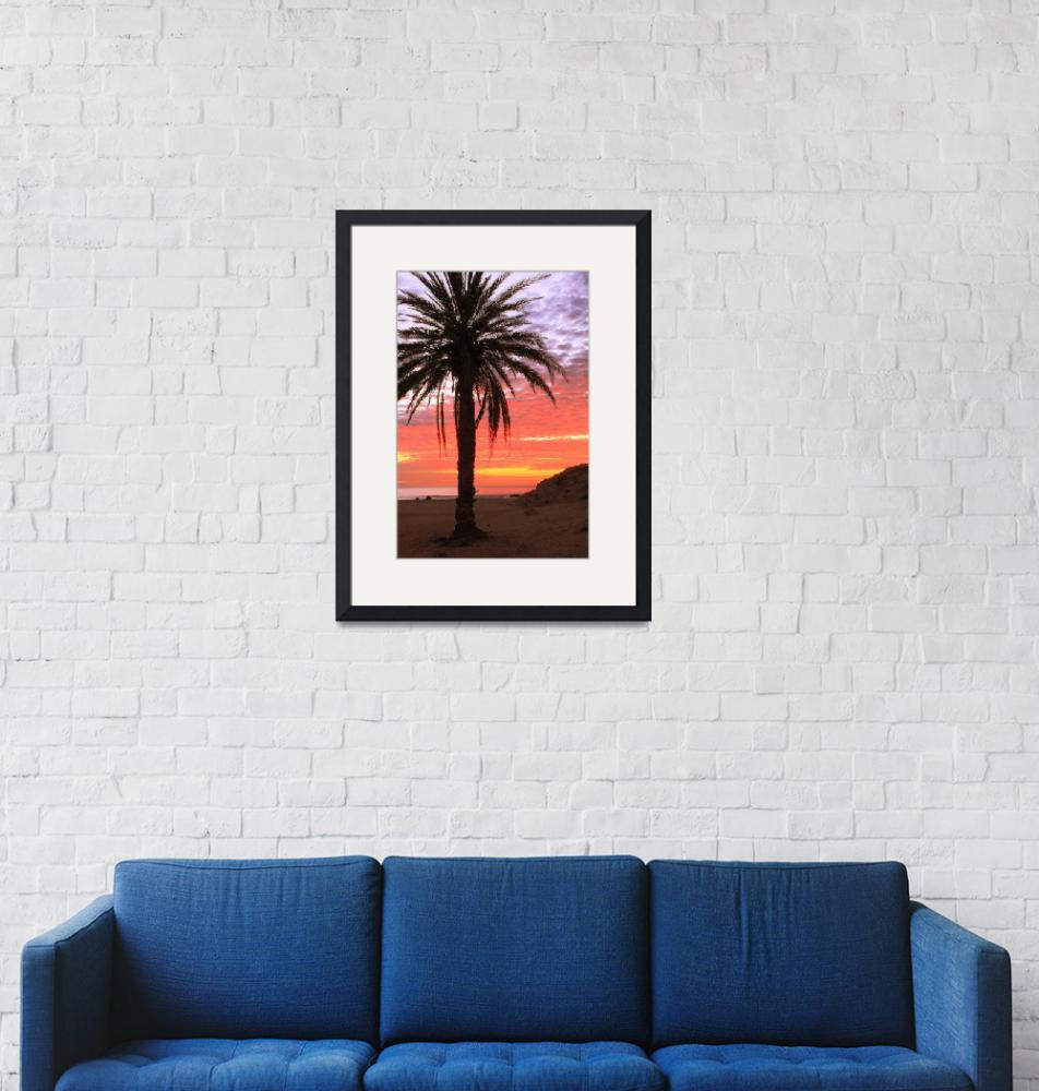 """""""Palm Tree and Dawn Sky, Cabo San Lucas Mexico""""  (2012) by RoupenBaker"""