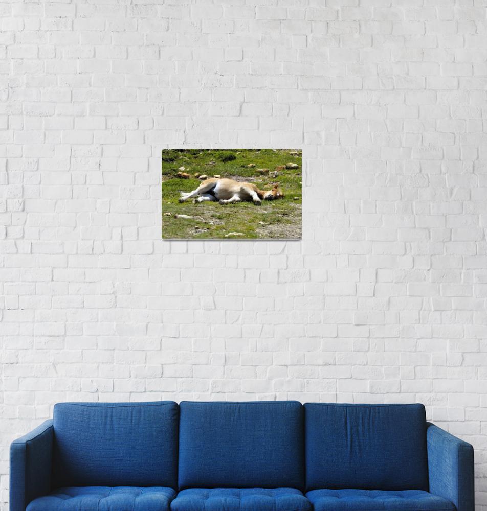 """Sleeping poney""  (2003) by JoaoPonces"