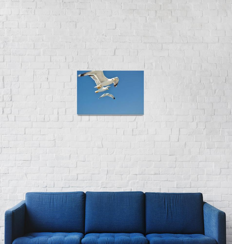 """""""Three white flying Seagulls against a blue sky""""  (2013) by creative_photography"""