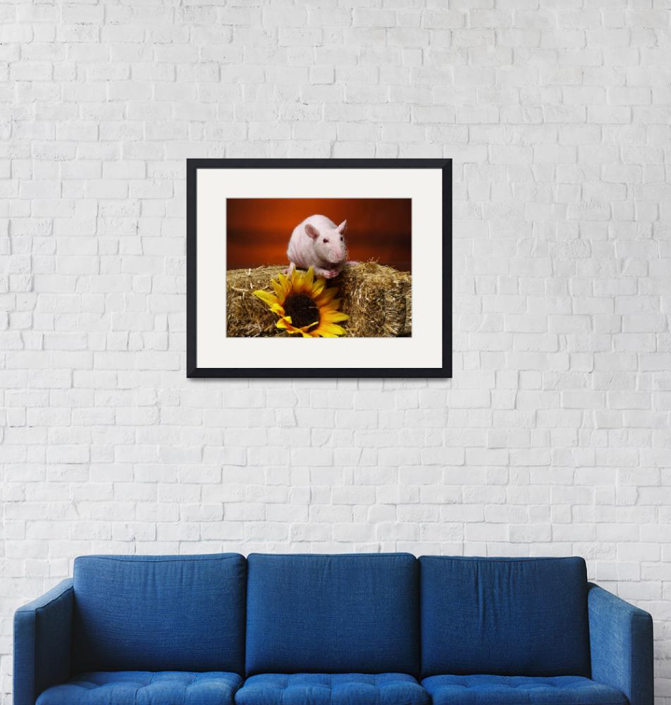 """""""Fluffy the Rat""""  (2009) by strickland"""