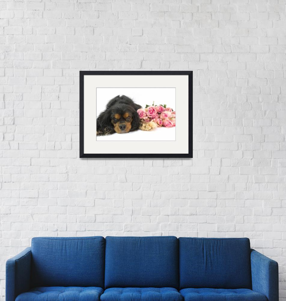 """""""A Cavalier King Charles Spaniel With Pink Roses""""  (2012) by Daphsam"""