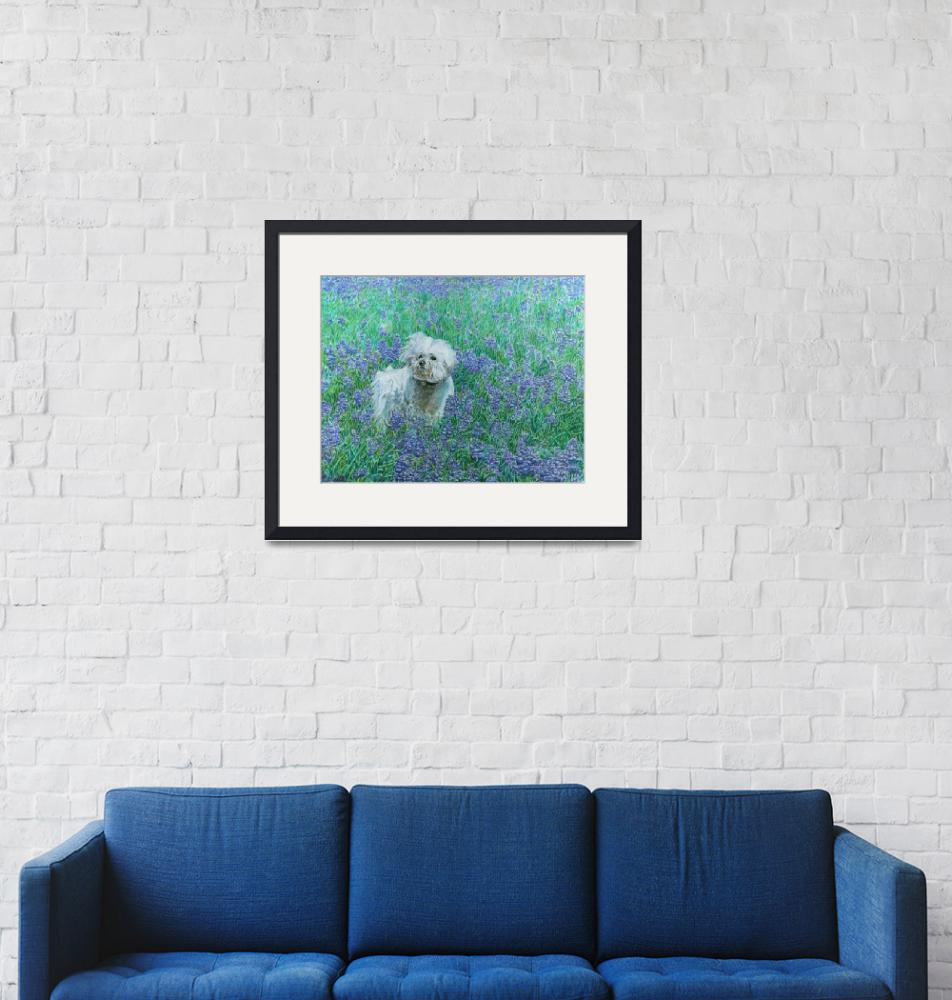 """Bichon in Bluebonnets""  (2013) by dominicwhite"
