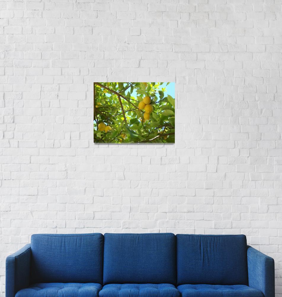 """Lemon trees.""  (2007) by ccrcats"