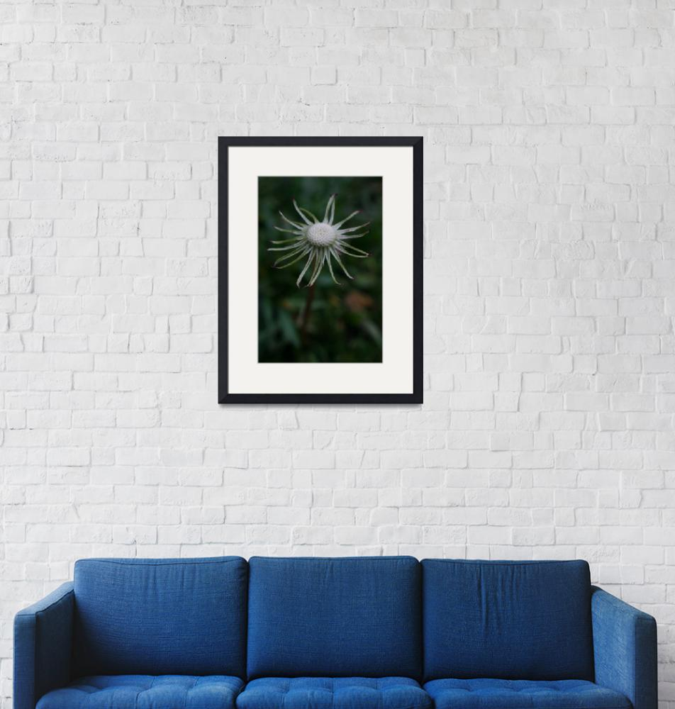 """Dandelion with no petals""  (2010) by imaginativeimagery"
