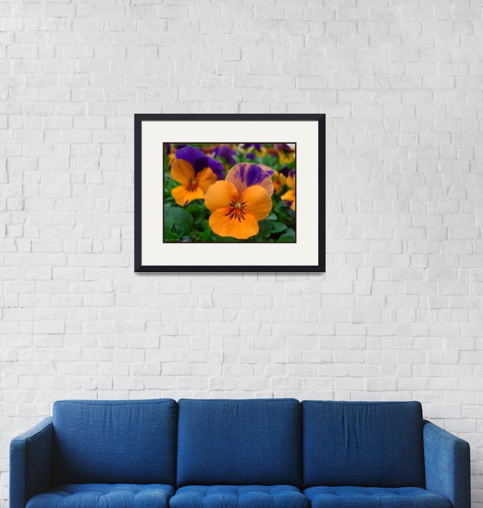 """""""Prismatic Pansies""""  by ccmerino"""
