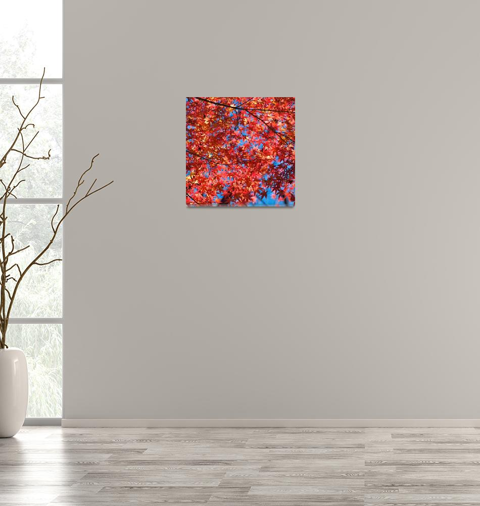 """""""Maple Leaves""""  (2008) by ImageArt-Photography"""