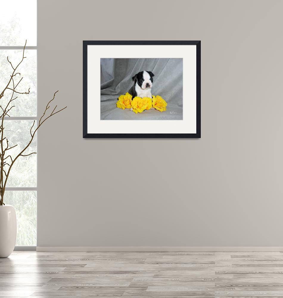 """Boston Terrier Puppy With Yellow Roses""  (2004) by ACuteProduction"
