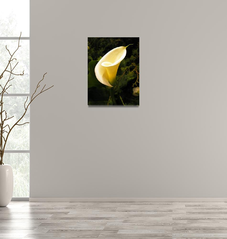 """Calla Lily""  (2007) by mikepdx"