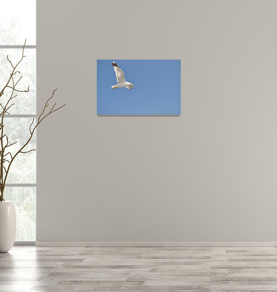 """""""White Seagull with spread wings flying against a b""""  (2013) by creative_photography"""