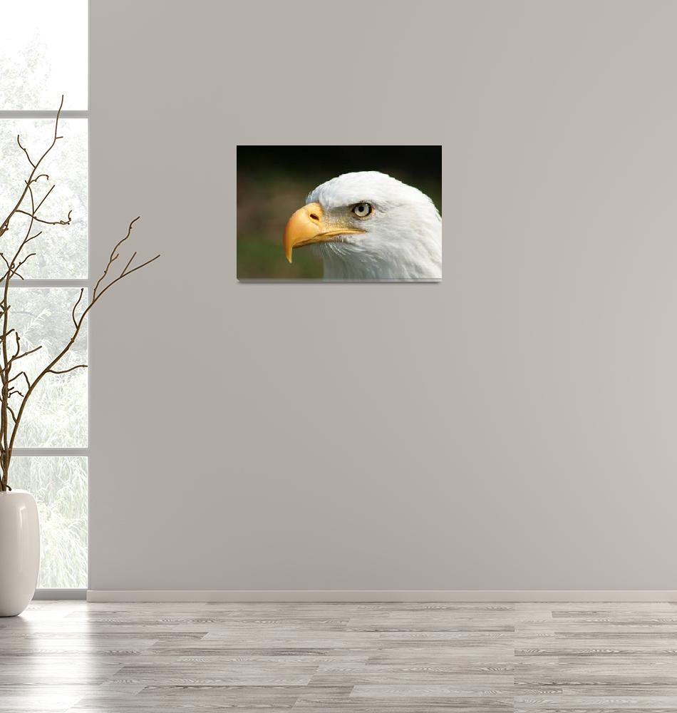 """Bald Eagle Watching""  (2014) by rhamm"