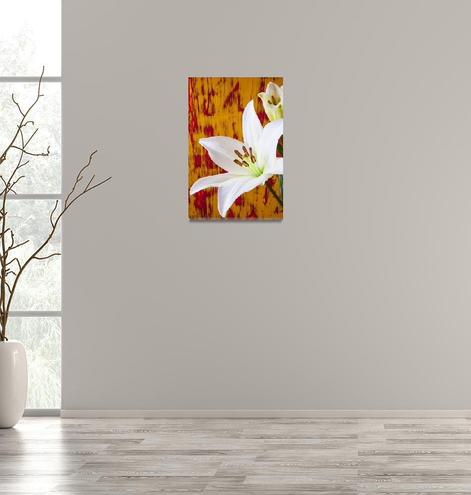 """""""Pure White Lily""""  (2012) by photogarry"""