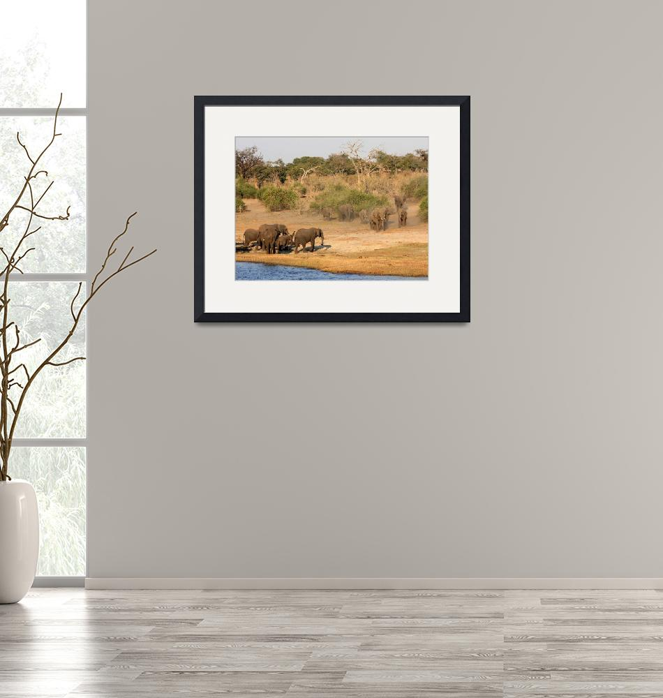 """""""Elephants gather at the Chobe River""""  (2013) by rayjacque"""