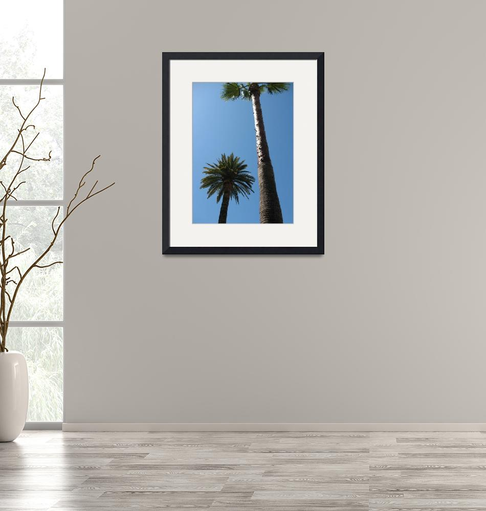"""""""palm trees""""  by DonnaGrayson"""