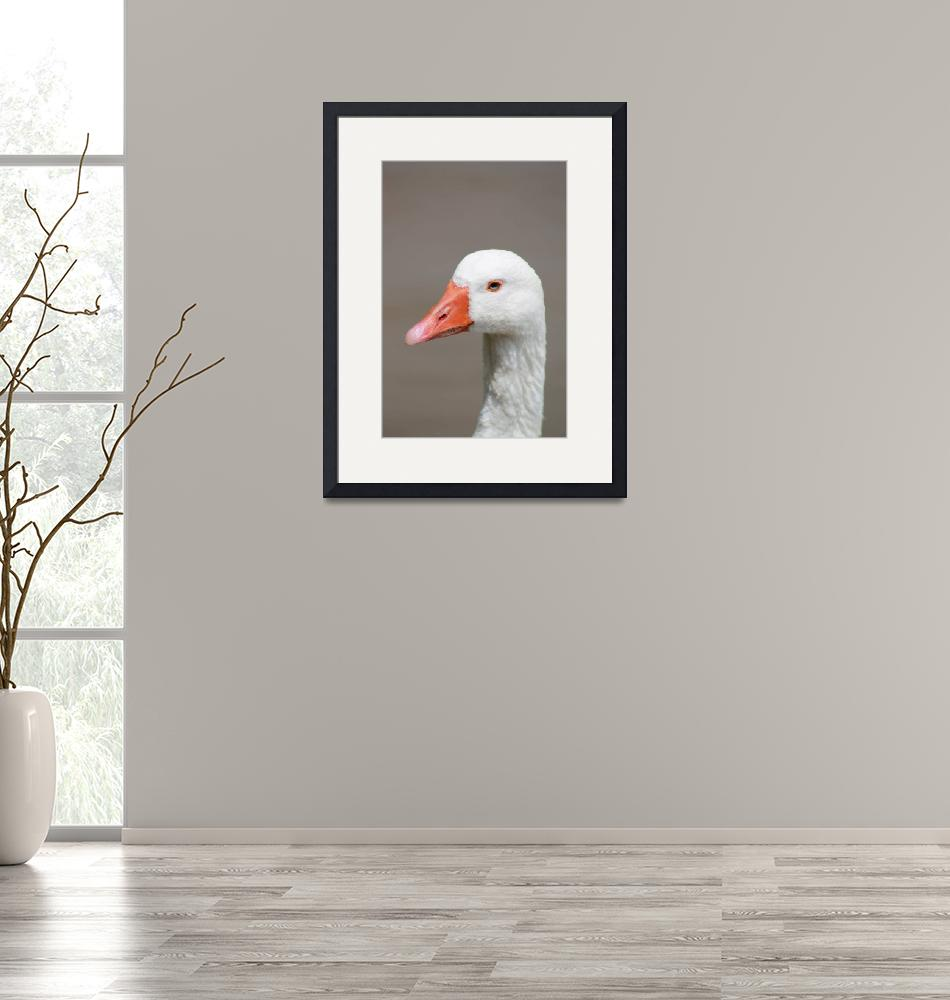 """""""White Goose""""  (2013) by coopercreekparkphoto"""