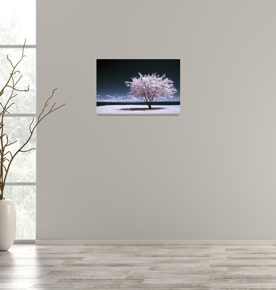 """a winter summer - infrared tree landscape""  (2007) by miir"