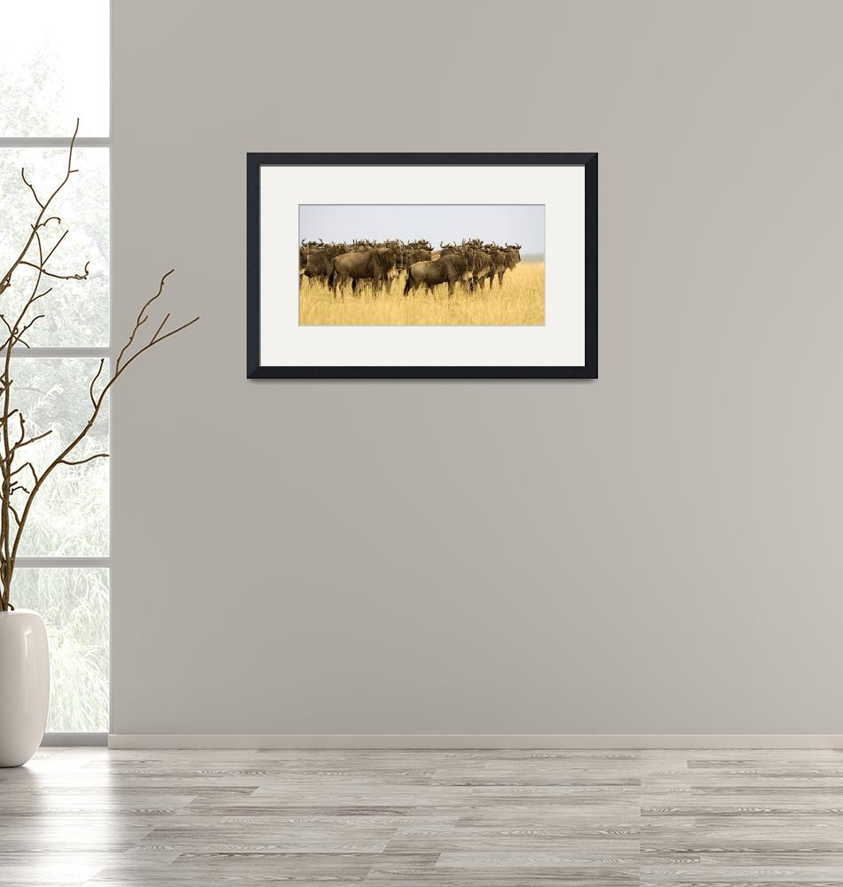 """""""Wildebeest""""  by Panoramic_Images"""