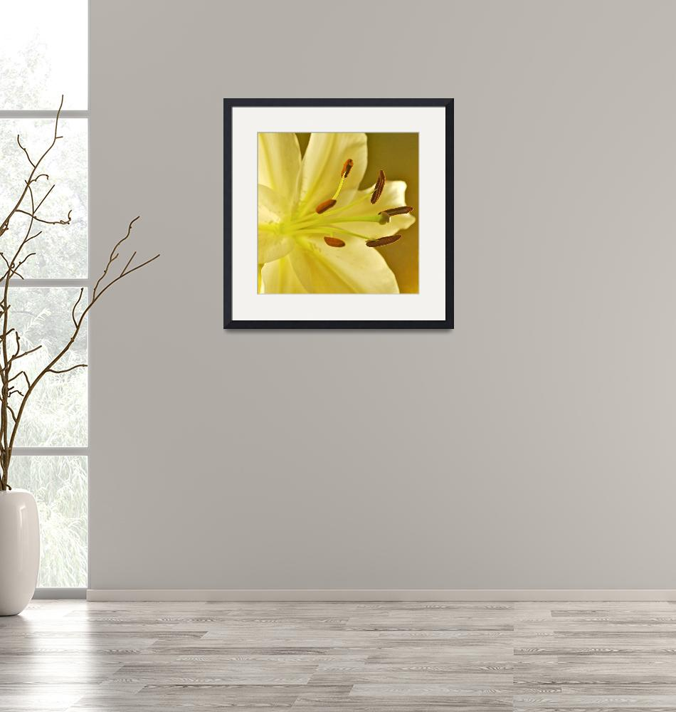 """""""Golden Lily""""  by PeturseyPhotography"""