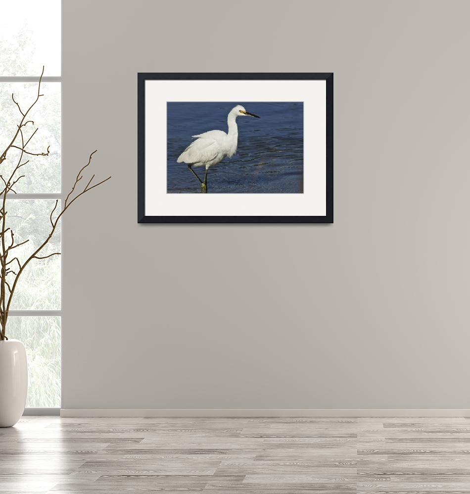 """""""White Egret 1DH285highres""""  by jimcrotty"""