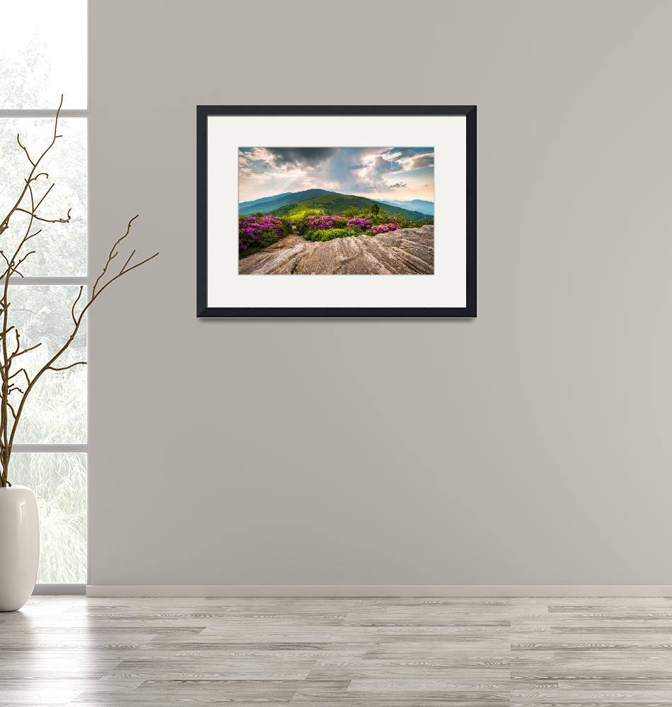 """Jane Bald in Bloom - Roan Mountain Highlands Lands""  (2011) by DAPhoto"