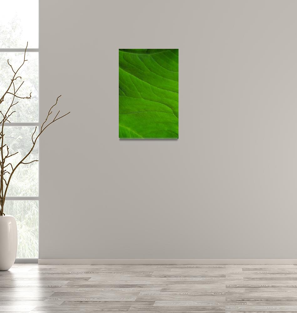 """""""Green Petal""""  (2011) by ideaproductions"""