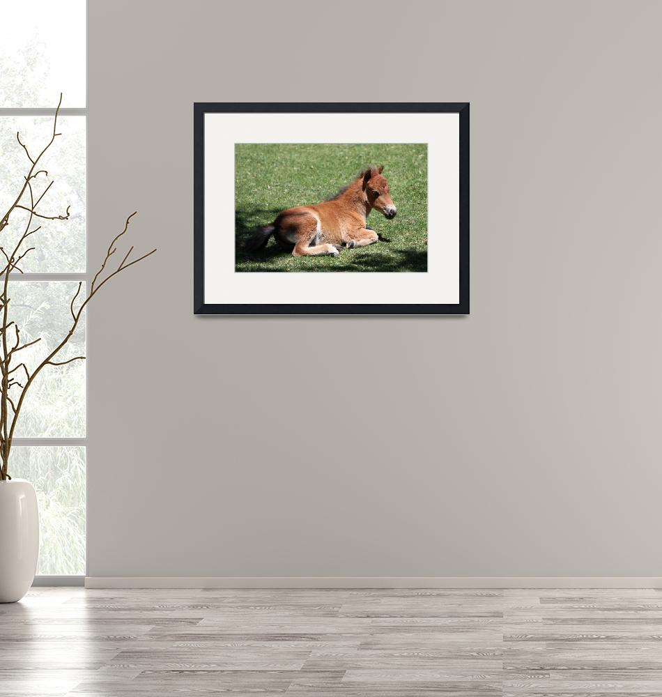 """BabyMiniatureHorse_22""  (2010) by SBCountyImages"